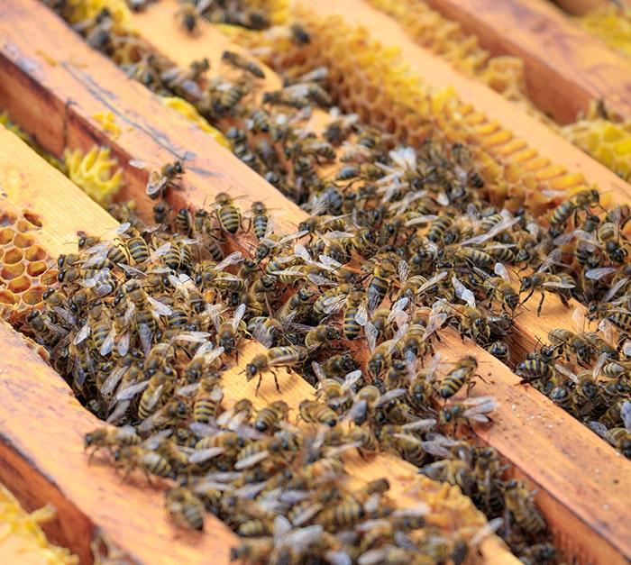 Traceur GPS ruche autonome plusieurs années