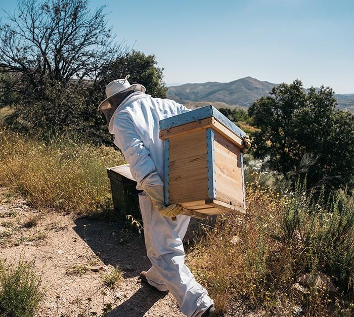 Suivi GPS et alerte de la ruche en cas de mouvement