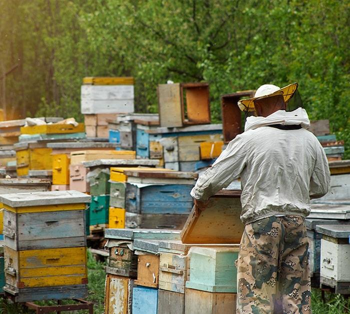 Installation facile du traceur GPS ruche dans le cadre