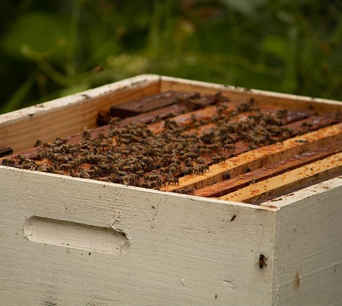 Un traceur GPS  ruche efficace et non invasif